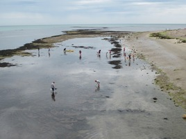 Rockpooling at Bembridge