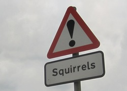Red squirrels warning roadsign