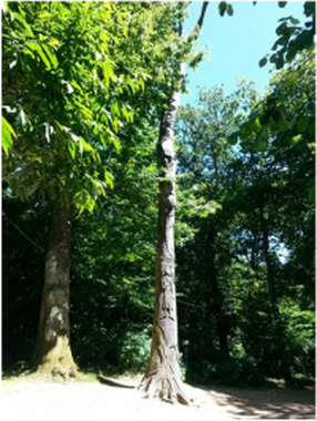 World's largest tree sculpture at Robin Hill by Paul Sivell